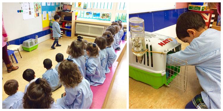 1º de Educación Infantil, la línea A, estudia los animales