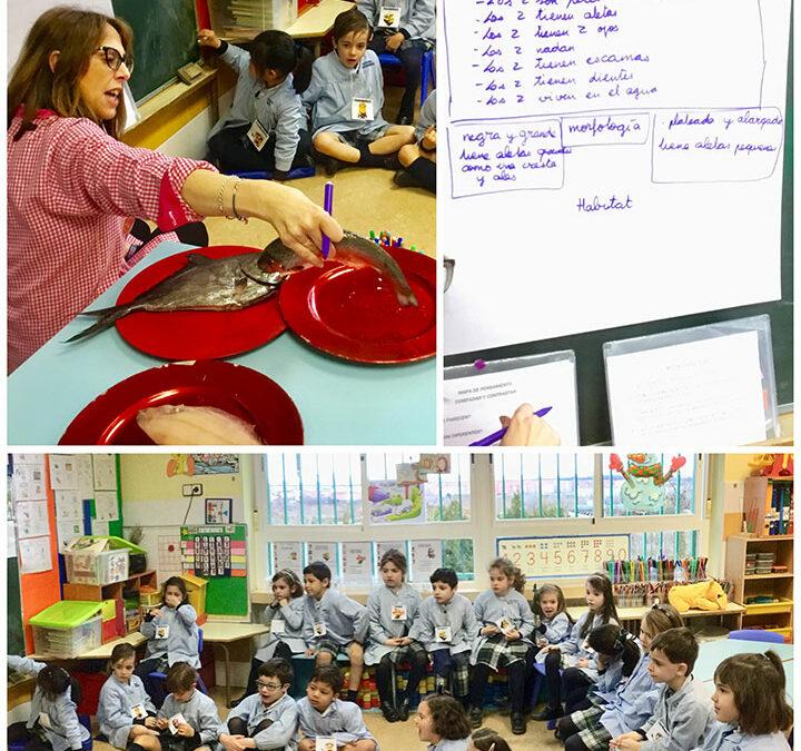 3º de infantil A compara y contrasta: palometa y trucha