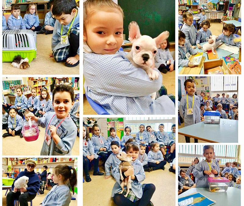 Los alumnos de Infantil realizan una investigación sobre los animales